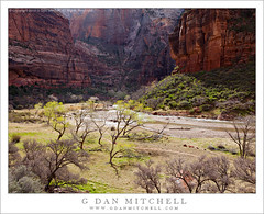 Zion Canyon, Virgin River, Spring (G Dan Mitchell) Tags: park trees red cliff usa mountain nature water rock wall bar america river print landscape flow utah spring big sandstone bend bottom north stock meadow canyon virgin trail national cottonwood license land zion curve weeping gravel rockcable