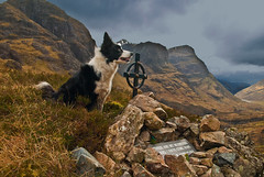 the homecoming glencoe (skyesam) Tags: mountains skye home sisters three collie cross border glencoe cairn highqualitydogs yahoo:yourpictures=yourbestphotoof2012