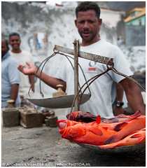 heavy fish (PhotoA.nl) Tags: food orange fish working scales dots weight caboverde capeverde santoantao pontadosol kaapverdie wwwphotoanl