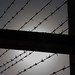 Barbed Wire Silouette (1)