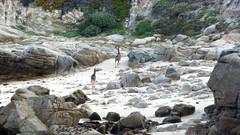 Pacific Grove 5-8-12 Paula Pic (14) (Photo Nut 2011) Tags: california beach monterey rocks deer pacificgrove