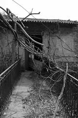 La natura vince (Little Margie) Tags: campania case 1980 benevento rovine vicoli desolazione paese terremoto apicevecchia