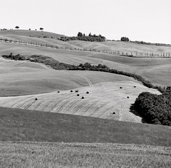 tuscany geometry, tuscany, italy, may 2011 [#017903] (Jeff Merlet Photography) Tags: blackandwhite bw italy tree 120 6x6 film field analog mediumformat square landscape europe published kodak tmax geometry horizon hill line 03 hasselblad tuscany mf cypress 100 hay tmax100 sonnar carre hassy 201105 voyagevoyage ncps sonnar250 analogphotgraphy jeffmerletphotography jeffmerlet photojeffmerletcom ncps7127 r0179 017903