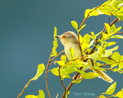 The blue wall (BorisWorkshop (130k+ views, thanks)) Tags: taiwan plainprinia hunei rememberthatmomentlevel1 rememberthatmomentlevel2 rememberthatmomentlevel3