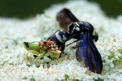 Ugly Bug Feast