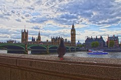 Hey You! (leszee) Tags: uk bridge houses house bird clock animal thames architecture river boat big high ship dynamic time ben pentax you unitedkingdom pigeon dove united hey gothic victorian housesofparliament kingdom parliament commons bigben aves clocktower imaging neogothic range riverthames hdr highdynamicrange thamesriver animalia westminsterbridge houseofparliament cityoflondon houseoflords revival the westminsterpalace columbidae victoriangothic heyyou thelords pentaxdslr westmister highdynamicrangeimaging thebigben westmisterbridge pentaxk5 houseofpeers lordsspiritualandtemporal houseofcommonsoftheunitedkingdom parliamentofunitedkingdom