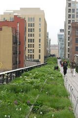 The High Line (Eric Hunt.) Tags: park white allium urbanpark amaryllidaceae ornamentalonion thehighline geophyte