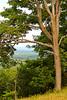 Tree (A Great Capture) Tags: from above blue summer mountain ontario canada tree nature village collingwood view top summertime on ald ash2276 ashleyduffus ashleylduffus wwwashleysphotoscom