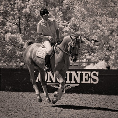 Photo of A Show-Jumper Warming Up