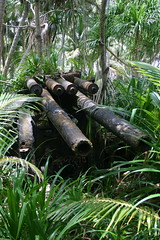WWII Japanese artillery in Imiej, Jaluit (Carine Boekee) Tags: sunlight islands gun wwii marshall jungle tropical artillery pacificisland atoll antiaircraft marshallislands tropicalclimate imiej jaluit