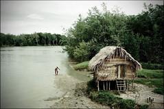 Catador de Caranguejo © Ricardo Lima (Ricardo_ Lima) Tags: green horizontal canon landscape fishing amazon flickr pesca pescador amazonia cabanas brazillandscapes amazônica amazonscene l´amazonie livininamazon