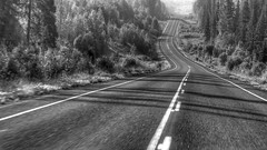 Some roads aren't meant to be travelled alone (BK101) Tags: road black beautiful olympus top20 mostbeautiful babarkhan mygearandme olympusem5 olympus1260mmonem5