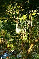 Am Seerosenteich im Wald (balu51) Tags: abend pond sommer grn ufer teich wald schilf naturschutzgebiet vogelhaus seerosen seerosenteich birdhousewatergreensummerjuli2012