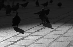 DSC02167 (piotr.brydak) Tags: kraków rynekgłówny gołębie krakoff