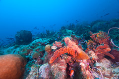 Sponges, corals and schools of fish in Barbados (b.campbell65) Tags: ocean life travel blue sea vacation fish nature water animal coral island sand marine colorful paradise underwater natural bottom scenic deep scuba diving sealife lagoon atlantic aruba deck antigua tropical barbados british caribbean aquatic wreck reef lesser berwyn undersea sponges antilles braincoral firecoral seabed seafloor frenchgrunt lesserantillies sergentmajors