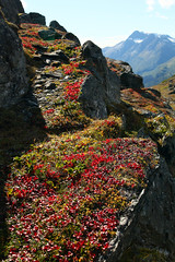 Thompson Pass near Valdez (NathanaelBC) Tags: valdez alaska usa america thompsonpass tundra