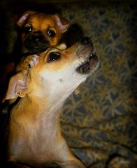 kira (slipijuank) Tags: dog animal cute dark nature chucho pentax optio rz10 light mascota house home hija mama happy bebe madre color