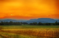 IMG_0396 sunset sunflowers (pinktigger) Tags: sunset sunflowers mountains landscape country countryside fagagna feagne friuli italy italia outdoor ~themagicofcolours~vii