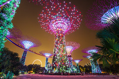 Supertrees Spectacular (WT Journal) Tags: singapore gardensbythebay supertree supertrees grove