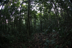 Guilherme.Gnipper-0355 (guilherme gnipper) Tags: picodaneblina yaripo yanomami expedio expedition cume montanha mountain wild rainforest amazonas amazonia amazon brazil indigenous indigena people