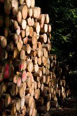 ckuchem-8293 (christine_kuchem) Tags: abholzung baum baumstmme bume einschlag fichten holzeinschlag holzwirtschaft wald waldwirtschaft