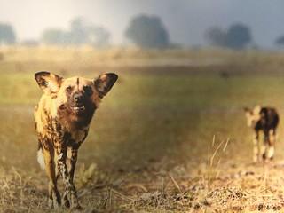 Namibia Dangerous Game Safari - Caprivi Strip 91