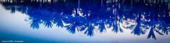 Blue reflections (Ignacio Ferre) Tags: azul blue reflejo reflection piscina swimmingpool vacaciones verano summer holidays summerholidays hotellopesancostameloneras spain espaa canaryislands islascanarias grancanaria costameloneras lumix panasonic lumixlx100 agua water maspalomas meloneras