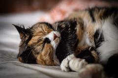 Söndagsstämning (MagnusBengtsson) Tags: doris husdjur katt fs160918 fotosondag stamning