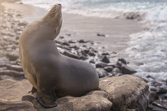 SUNDAY (Cre8 Thru Action) Tags: sea sealion sandiego travel california sunday sun a6000 sonya6000 sonyalpha