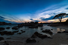 U Pinu-blue hour (bonacherajf) Tags: corse corsica palombaggia pin plage portovecchio sunset coucherdesoleil heurebleue bluehour