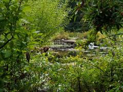 Pond through the bushes (pilechko) Tags: bowmanshill preserve pond light color green summer buckscounty newhope pennsylvania