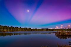 Moonlight Sonata (miTsu-llaneous) Tags: trinidad trinidadandtobago nature landscape sunrise moon coconut trees rays morning dawn swamp reflection caribbean island