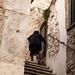 Pietramontecorvino Puglia