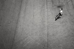 236/366 - Negativer Raum / Negative Space (Boris Thaser) Tags: 365 366 32 bewegung creativecommons explore flickr fujixt1 fujifilmxt1 kickboard kind menschen moscow moskau mdchen negativerraum platz project365 projekt querformat roller russia russland sw schatten schwarzweis skaten sport stadt strase strasenfotografie streetphotography szene bw blackandwhite candid child city dynamic dynamisch girl jung kid landscapeformat motion movement negativespace people photoaday pictureaday project project366 scene shade shadow skating square street streettog tog ungestellt unposed young zweisichtde zweisichtig