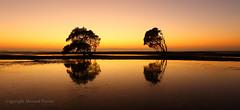 Golden dawn (Howard Ferrier) Tags: oceania sunrise plants dawn moretonbay orange seq beach beachmere tree inlet reflection sunshinecoast bay australia queensland flora vegetation time