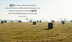 Proverbs 19:20-21 (dianabog ) Tags: bible scripture theword