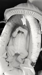 Cosy Cherub (kellyhackney1) Tags: baby cherub cosy cosycherub babylove love toobig mosesbasket ourworld myworld growingbaby cute piccy sleeping