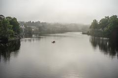 Rowing on Nidelven river (Helena Normark) Tags: rowers fog mist bakklandet nidelven nidelva trondheim srtrndelag norway norge sonyalpha7ii a7ii voigtlnder voigtlanderultron35mmf17 ultron35mmf17