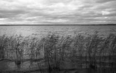 The lake (Nils Kristofer Gustafsson) Tags: blackandwhite bnw ishootfilm retro rollei 400s lomo lomography sweden rebro keepfilmalive filmisnotdead filmphotography film rodina adonal yashica electro cc 35mm