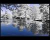 Nell'oasi naturalistica (IR) (antony5112) Tags: trees nature alberi natura swamp infrared palude blueribbonwinner infrarosso thegalaxy rockpaper oasinaturalistica casalbeltrame bestcapturesaoi elitegalleryaoi flickrstruereflection1 flickrstruereflection2 flickrstruereflection3 flickrstruereflection4 flickrstruereflection5 flickrstruereflection6 flickrstruereflection7 flickrstruereflectionexcellenceaward rememberthatmomentlevel4 rememberthatmomentlevel1 rememberthatmomentlevel2 rememberthatmomentlevel3 rememberthatmomentlevel7 rememberthatmomentlevel9 rememberthatmomentlevel5 rememberthatmomentlevel6 rememberthatmomentlevel8 rememberthatmomentlevel10 flickrstruereflectionlevel8