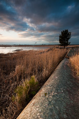Lonely tree - Vstra tye (- David Olsson -) Tags: cliff lake reed nature water rock clouds landscape nikon cloudy sweden sigma filter april 1020mm grad dramaticsky 1020 hitech vnern lonelytree 2012 warmlight dx hammar vrmland gnd lonesometree d5000 davidolsson tyns 12soft vstratye