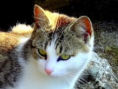 Our Neighbors in the City (dimaruss34) Tags: newyork brooklyn cat image topshots natureselegantshots theoriginalgoldseal dmitriyfomenko spring22012