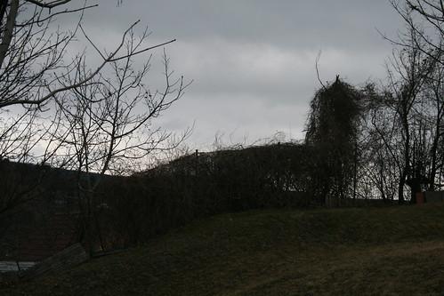 Devín Castle - Bratislava SK March.2012