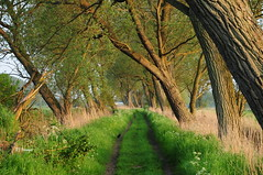 Tree Path (EJ Images) Tags: uk trees light sunset england sun slr rural countryside suffolk nikon dusk path country dslr goldenhour eastanglia beccles 2012 nikonslr d90 nikondslr nikond90 dsc0830 becclesriver 18105mmlens ejimages