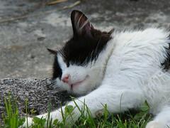 Miao !!! (Alex - Born To Be Free) Tags: cat gatto animale