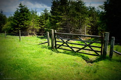 (andrewlee1967) Tags: fence trees grass yorkshire uk gb england andrewlee1967 gate sonynex3 andrewlee