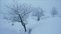 Behelainotan (YuriSnow) Tags: nieve natura invierno frio elurra zuhaitzak urdina negua hotza canoneos400d behelainoa izadia