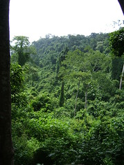 Kbal Spean trail (oldandsolo) Tags: cambodia buddhism worldheritagesite greenery siemreap buddhisttemple mountaintrail kbalspean angkorarchaeologicalpark khmerkingdom theruinsofangkor siemreapcountryside buddhistfaith angkortempleruins