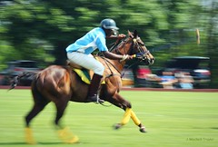 polo motion (Jen MacNeill) Tags: horse sport player riding pony ponies panning polo worktoride
