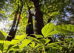 Things are looking up - Lapham Peak Park Delafield Wisconsin (2sheldn) Tags: looking up lapham peak park delafield wisconsin tree forest woods sky above skyabove sheldn canon t2i 550d tamron1024 copyrightdanielsheldon allrightsreserveddanielsheldon sheldnart allrightsreserved wi water agua h2o copyright sheldon danieljsheldon rebel eos 550 license danielsheldon